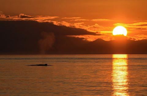17-11-10_3646 humpback sunset BB