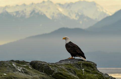 Bald Eagle mountains